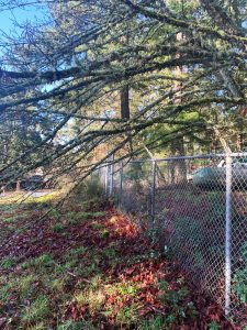 chain link fence victoria bc